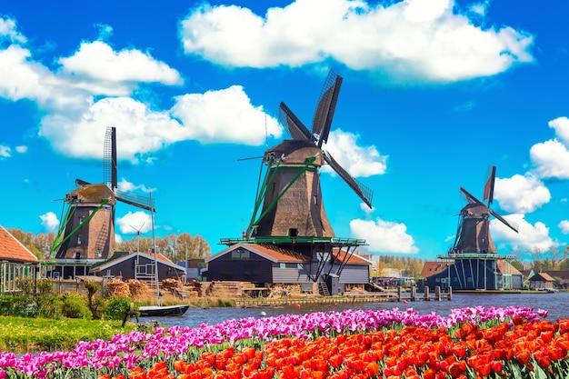 Hollands typisch landschap. traditionele oude nederlandse windmolens met huis, blauwe lucht in de buurt van rivier met tulpen bloemen bloembed in het dorp zaanse schans, nederland. beroemde toeristische plaats.