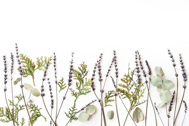 Homeopathie eco alternatieve geneeskunde concept - thuja, eucalyptus, lavendel helende kruiden en op witte muur. flatlay. bovenaanzicht. copyspace