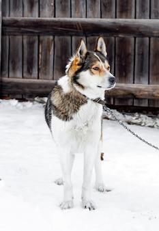 Hond aangelijnd in de winter