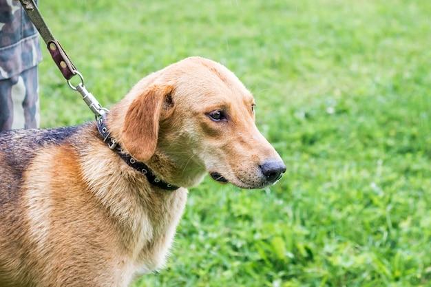Hond aangelijnd tijdens de wandeling