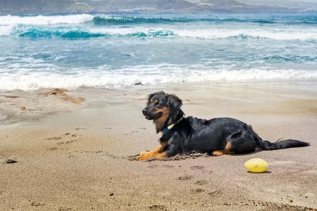 Hond alleen zittend op het strand, op het zand, met de blauwe zee achter en verlicht door zonlicht.