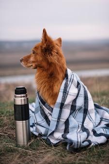 Hond bedekt met deken buitenshuis