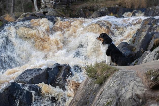 Hond bij de waterval