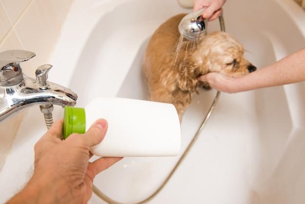 Hond bij het verzorgen van salon die bad heeft.