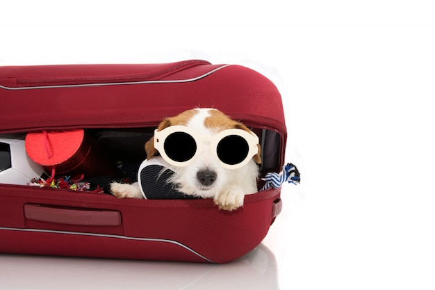 Hond binnen een rode moderne bagage of bagage die op vakanties gaat die zonnebrillen dragen.