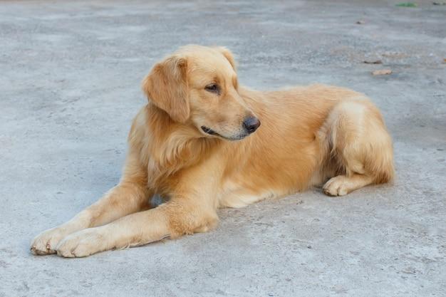 Hond detail dier huisdier