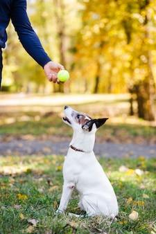 Hond die bal in park bekijkt