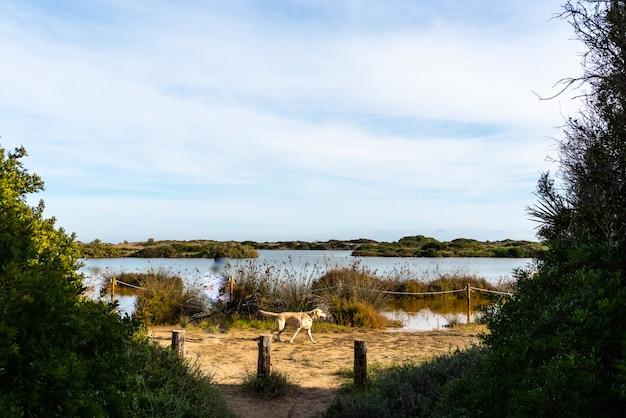 Hond die door het gavines-meer lopen, dichtbij een strand in valencia, spanje