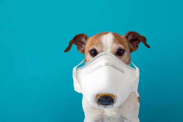 Hond die een medisch gezichtsmasker draagt om zichzelf te beschermen tegen infectie