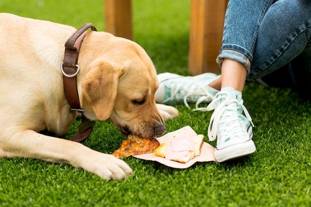Hond die een sandwich in park eet