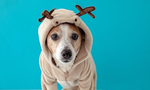 Hond die het kostuum van kerstmisherten draagt