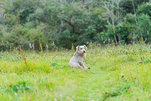 Hond die in de schaduw rust