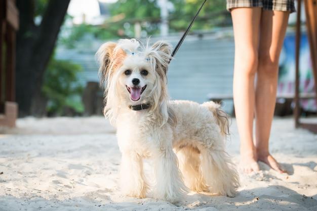Hond die in het zand op een zonnige dag glimlacht.