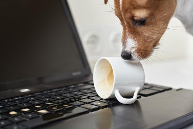 Hond die koffie op laptop toetsenbord morst