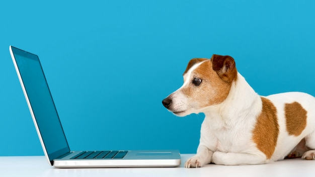 Hond die laptop met rente bekijkt