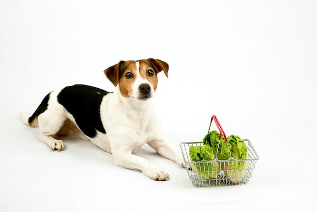 Hond die met een mand met salade ligt