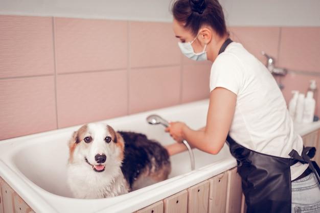Hond die mond opent. schattige hond die mond opent terwijl werknemer van trimsalon hem in de badkuip wast