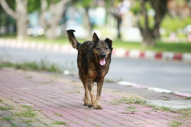 Hond die op de straat loopt