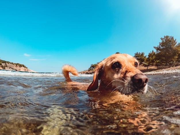 Hond die op het strand geniet van terwijl het zwemmen in het overzees
