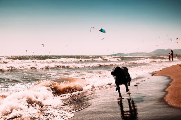 Hond die op strand loopt, dicht bij zee.