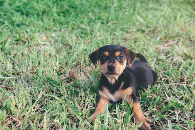 Hond die op zoek is naar iemand die met hem wil spelen of op eten wil wachten.