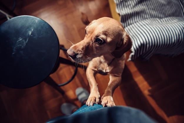 Hond die zich op achterste benen bevindt