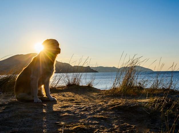Hond die zich op een rots bevindt
