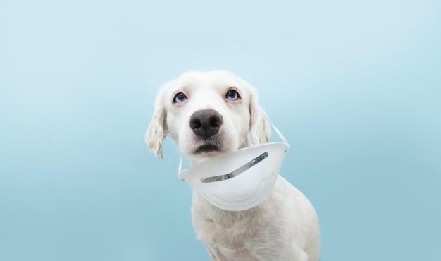 Hond draagt een beschermend gezichtsmasker op een verkeerde manier.