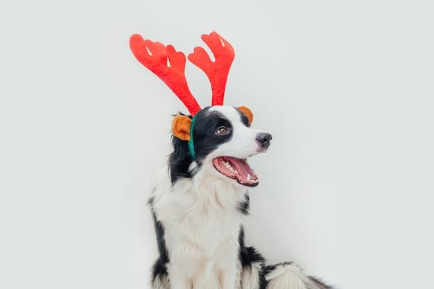 Hond draagt kerst kostuum rode herten hoorns hoed geïsoleerd op een witte achtergrond