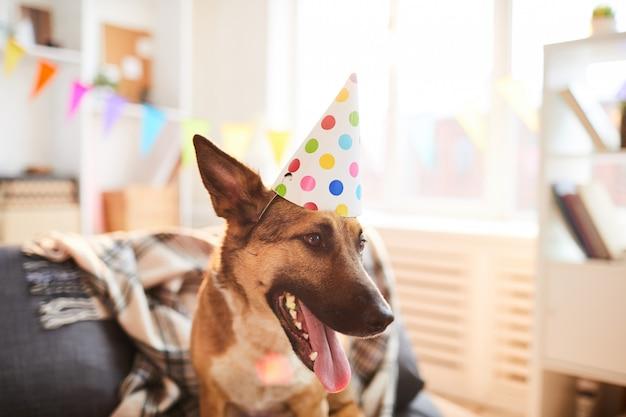 Hond draagt verjaardag pet