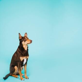 Hond en copyspace