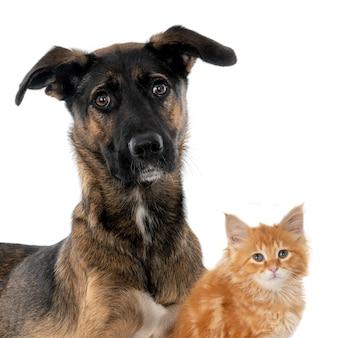 Hond en gemberkatje samen tegen witte muur