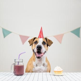 Hond en haar verjaardagstraktatie in de vorm van een feestelijke taart en een drankje. schattige puppy in een feestmuts poseren in ingerichte kamer met een muffin