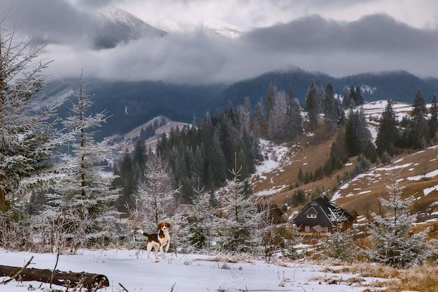 Hond en huis in landelijk land Premium Foto