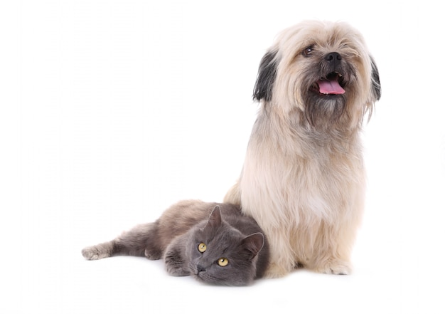 Hond en kat die op een witte achtergrond wordt geïsoleerd