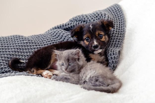 Hond en kat, kitten en puppy. groep van twee kleine dieren liggen samen op bed. triest grijs katje en zwarte puppy op witte deken alleen thuis. kalm kat hond liefde vriendschap relatie zoogdier dier.