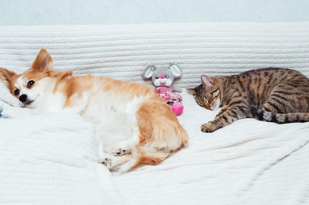 Hond en kat slapen samen met speelgoed op het bed. detailopname.