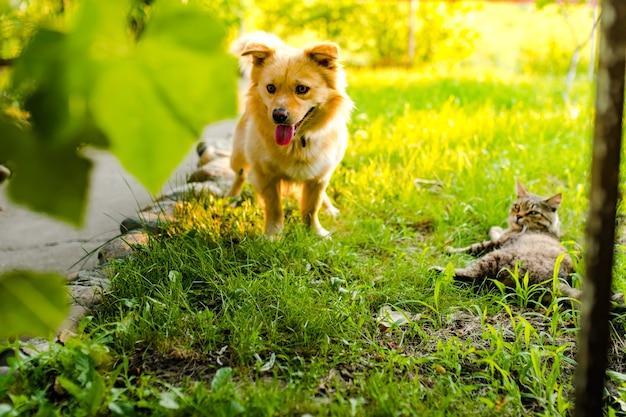 Hond en kat spelen in de tuin tegen de achtergrond van het avondzonlicht
