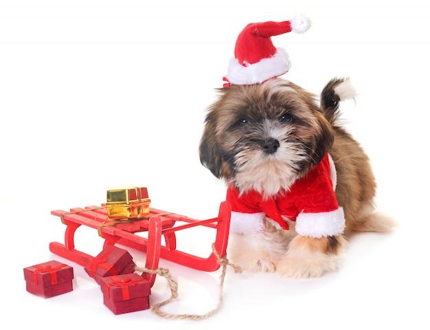 Hond en kerstmis