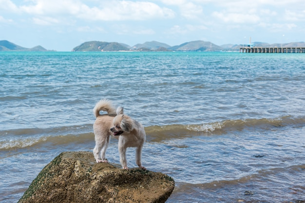 Hond gelukkige pret op rotsachtig strand wanneer reis op zee