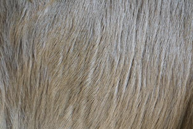 Hond haar close-up