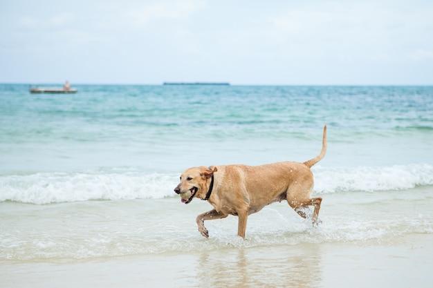 Hond het spelen bal op het strand