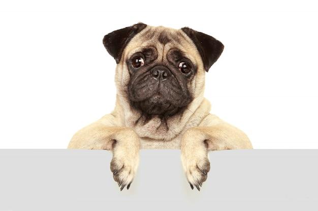 Hond hond geïsoleerd