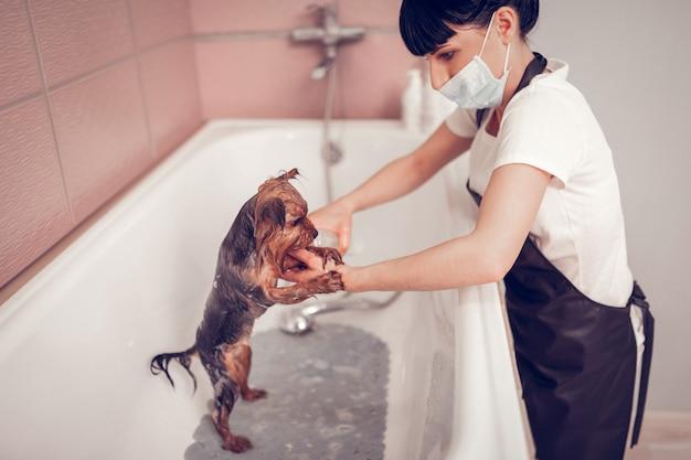 Hond in badkuip. donkerharige vrouw met masker wassen hond in badkuip na het scheren Premium Foto