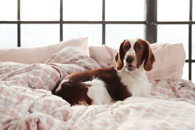 Hond in bed in de ochtend