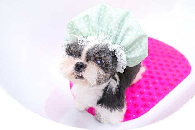 Hond in de trimsalon; de hond neemt een douche; het huisdier krijgt schoonheidsbehandelingen in de hondenschoonheidssalon. in de badkamer in een douchemuts