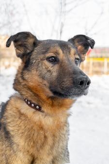 Hond in de winter in de sneeuw. een huisdier.