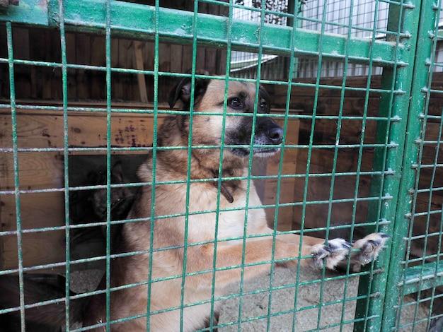 Hond in dierenasiel, dakloze hond in de kooi