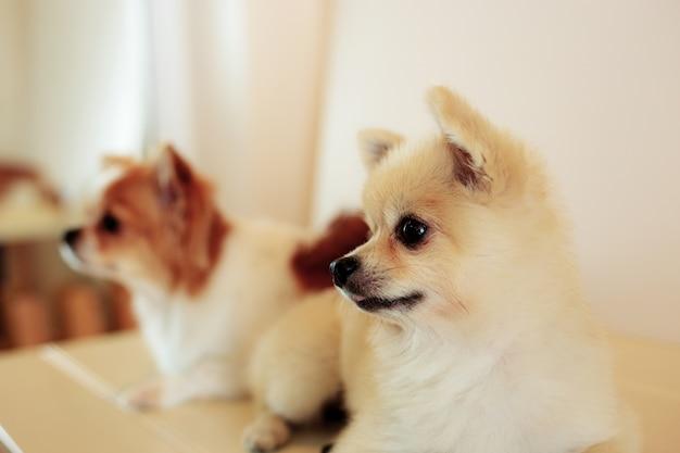 Hond in dierenwinkel.