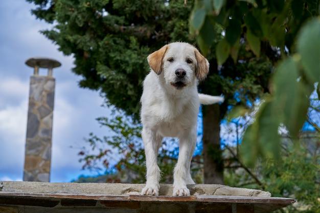 Hond in een dakbovenkant in andalusia spanje